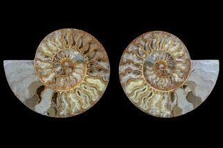 "Buy 7.7"" Agate Replaced Ammonite Fossil (Pair) - Madagascar - #166945"