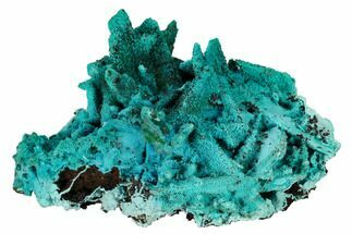 "Buy 3.55"" Chrysocolla and Malachite Pseudomorph - Lupoto Mine, Congo - #167683"