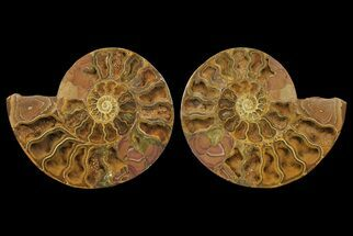 "Buy 13.9"" Orange, Crystal Filled, Cut Ammonite Fossil (Pair) - Jurassic - #168535"
