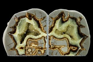 Septarian - Fossils For Sale - #170004
