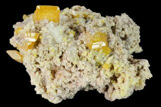 "1.8"" Orange Wulfenite and Botryoidal Mimetite - La Morita Mine, Mexico For Sale, #170303"