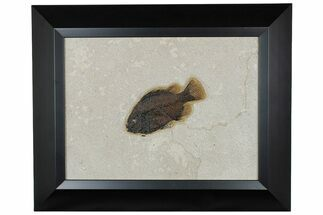"Buy 5.1"" Framed Fossil Fish (Cockerellites) - Wyoming - #177301"