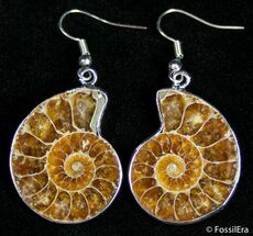 Ammonite Earrings For Sale, #2681