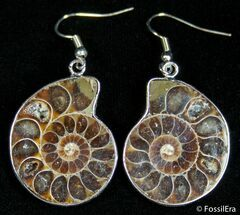 Ammonite Earrings For Sale, #2684