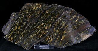 Banded Tiger Iron Stromatolite - Australia (2.7 Billion Years) For Sale, #22493