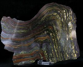 Buy Banded Tiger Iron Stromatolite - Australia (2.7 Billion Years) - #22495