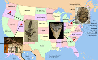 List of State Fossils For Sale