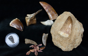 New Fossils of Jurassic World Page