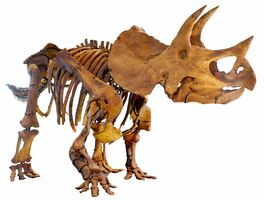 South Dakota State Fossil - Triceratops Horridus