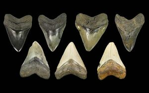 Why Do Fossils Come In So Many Colors?