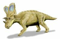 An artists reconstruction of Chasmosaurus.