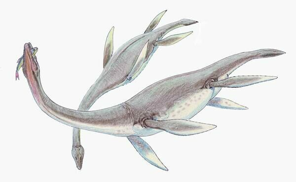 Artists reconstruction of a pair of feeding Plesiosaurs.  Creatives Commons License by 
