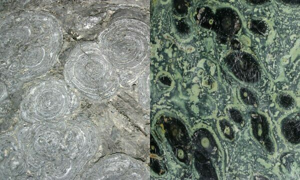 Left: Stromatolites (Hoyt Limestone, Upper Cambrian, New York, USA)  Right: Polished kambaba jasper