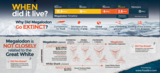 "24x36"" Megalodon Infographic Poster (Glossy) - Photo 4"