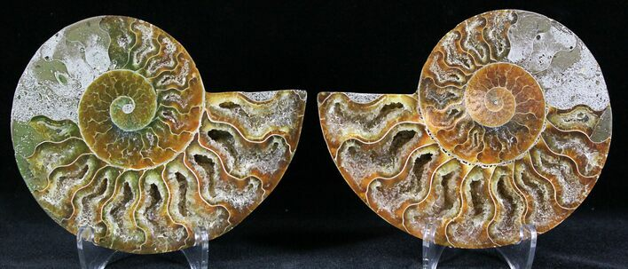 "3.62"" Polished Ammonite Pair - 110 Million Years"