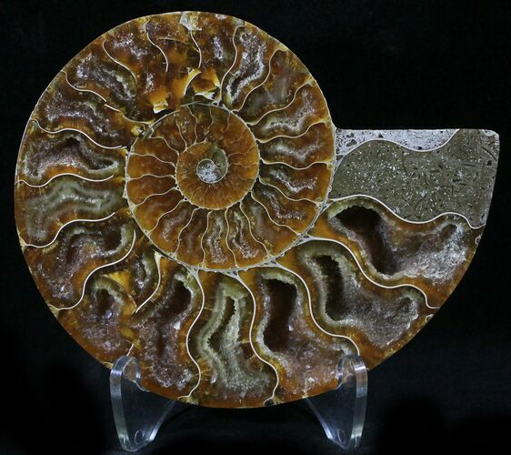 "4.1"" Agatized Ammonite Fossil (Half)"