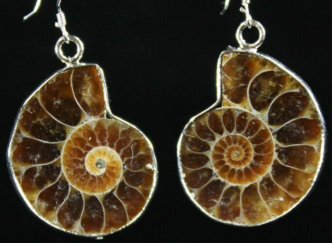 Stylish Fossil Ammonite Earrings