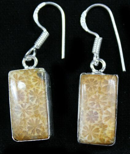 Beautiful Fossil Coral Sunburst Earrings