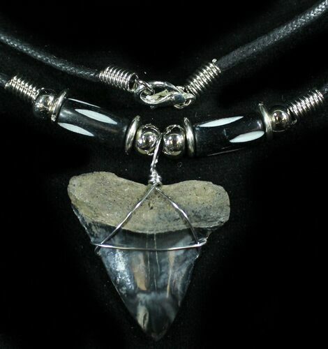 "1.2"" Fossil Mako Tooth Necklace"