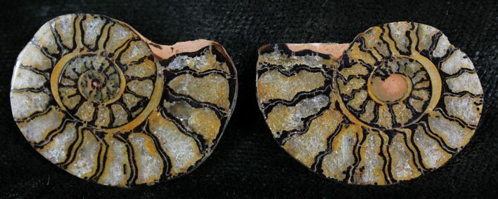 "1.2"" Iron Replaced Ammonite Fossil Pair"