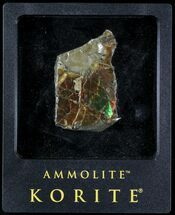"2.1"" Brilliant Iridescent Ammolite With Display Case For Sale, #31688"