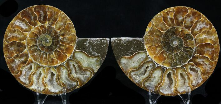"3.75"" Polished Ammonite Pair - Crystal Pockets"
