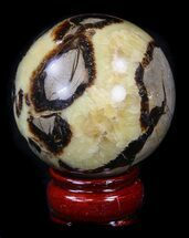 Septarian - Fossils For Sale - #36057
