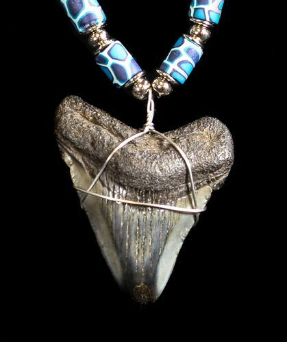 "2.15"" Polished Megalodon Tooth Necklace"