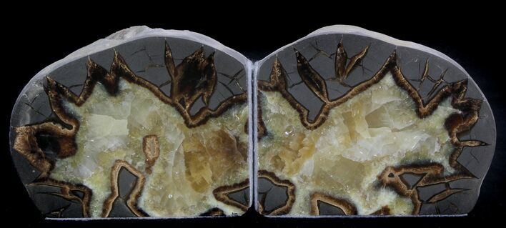 "4.8"" Polished Septarian Bookends"