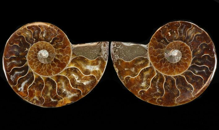 "2.9"" Sliced Fossil Ammonite Pair - Agatized"