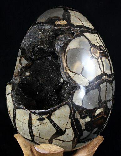 "Huge, 9.8"" Septarian ""Dragon Egg"" Geode - Crystal Filled"