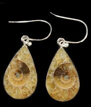 Fossil Ammonite Earrings - Sterling Silver For Sale, #38135
