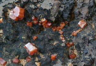 Vanadinite  - Fossils For Sale - #38514