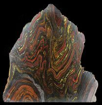 "Buy 9.1"" Polished Tiger Iron Stromatolite - (2.7 Billion Years) - #39178"
