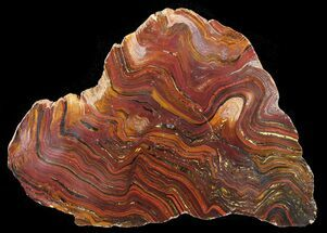 "12.8"" Polished Tiger Iron Stromatolite - (2.7 Billion Years) For Sale, #39179"