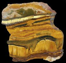 "Buy 6.2"" Marra Mamba Stromatolite - Mt. Brockman (2.7 Billion Years) - #39196"