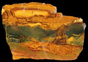 "3.9"" Marra Mamba Stromatolite - Mt. Brockman (2.7 Billion Years) For Sale, #39197"