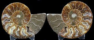 "3.5"" Sliced Fossil Ammonite Pair - Agatized For Sale, #39593"