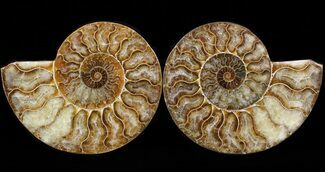 "5.25"" Cut & Polished Ammonite Pair - Agatized For Sale, #39500"