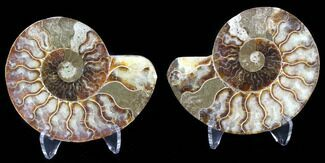 "4.1"" Sliced Fossil Ammonite Pair - Agatized For Sale, #39596"
