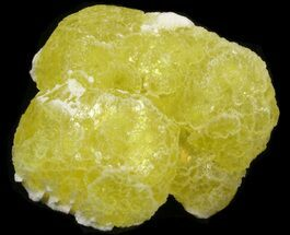 "1.45"" Lemon Yellow Brucite (New Find) - Pakistan For Sale, #40379"