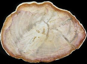 Tropical Hardwood - Fossils For Sale - #41895