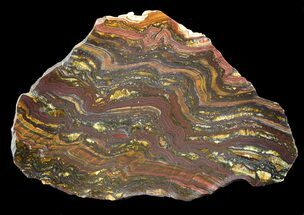 Tiger Iron Stromatolite - Fossils For Sale - #42582