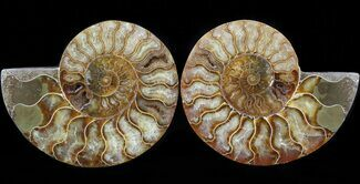 "Buy 5.6"" Cut & Polished Ammonite Pair - Crystal Chambers - #42502"
