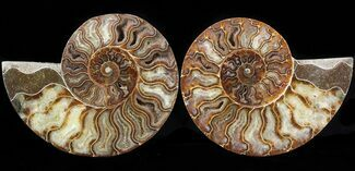 "5.7"" Cut/Polished Ammonite Pair - Agatized For Sale, #42509"