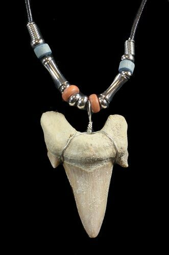 "2"" Fossil Otodus Shark Tooth Necklace"