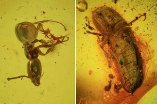 Fossil Beetle, Ant & Spider In Baltic Amber For Sale, #45179