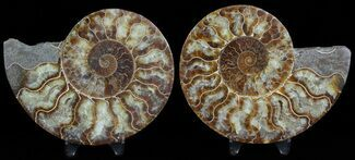 "4.6"" Polished Ammonite Pair - Agatized For Sale, #45485"