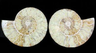 "4.6"" Polished Ammonite Pair - Agatized For Sale, #45506"