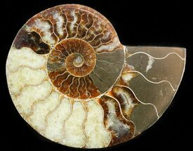 "4.9"" Agatized Ammonite Fossil (Half)  For Sale, #45530"